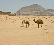 De woestijn van Wadi Rum, Jordanie