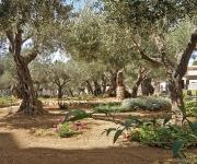 Getsemane